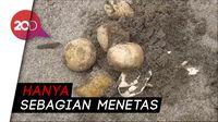 Cuaca Buruk, Ratusan Telur Penyu di Polewali Gagal Menetas