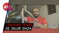 Pria di Gaza Sulap Apartemennya jadi Kebun Binatang