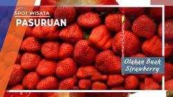 Olahan Buah Strawberry Pasuruan