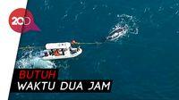 Heroik! Penyelamatan Ikan Paus dari Jaring Nelayan