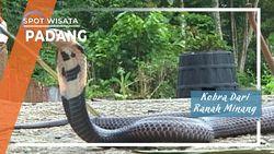 Kobra Dari Ranah Minang, Padang