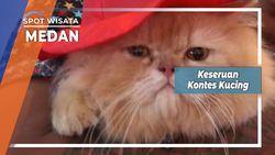 Keseruan Kontes Kucing Medan