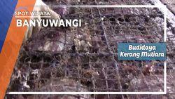Budidaya Kerang Mutiara Banyuwangi