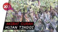 Cabai Diserang Patek, Petani di Konawe Selatan Gagal Panen