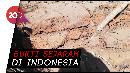 Struktur Bata Diduga Bangunan Kuno Ditemukan di Pasuruan