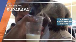 Kontes Kecantikan Musang Surabaya