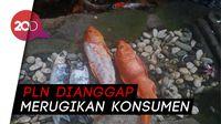 Ikan Koi Mati Gegara Listrik Padam, PLN Digugat Rp 9,2 Juta