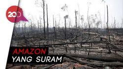 Melihat Kerusakan Amazon Akibat Kebakaran Hutan