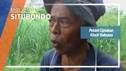 Petani Ciptakan Kincir Raksasa, Situbondo