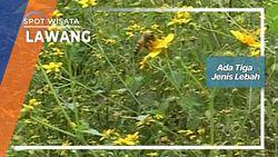 Menggembalakan Lebah Lawang Jawa Timur