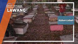 Menuju Kebun Lebah Jember Jawa Timur