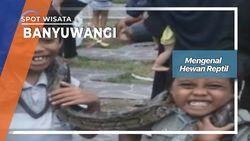 Mengenal Hewan Reptil, Banyuwangi