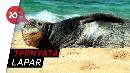 Lucu Banget! Momen Singa Laut Sapa Turis di Atas Kapal