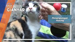 Penampungan Kucing, Gianyar