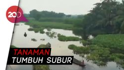Gundukan Eceng Gondok di Bangladesh Ternyata Kebun Apung