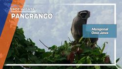 Mengenal Owa Jawa, Pangrango