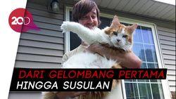 Pakar Amerika Sebut Kucing Bisa Bantu Deteksi Gempa