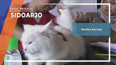 Kontes Kucing, Sidoarjo