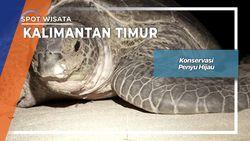 Konservasi Penyu Hijau di Pulau Derawan Kalimantan Timur