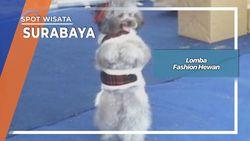 Lomba Fashion Hewan Surabaya