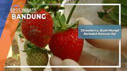 Strawberry, Buah Mungil Berbalut Ratusan Biji Bandung