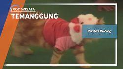 Kontes Kucing, Temanggung