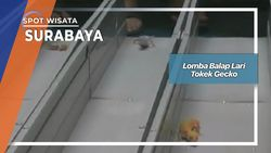 Lomba Balap Lari Tokek Gecko, Surabaya