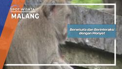 Berwisata dan Berinteraksi dengan Monyet, Malang