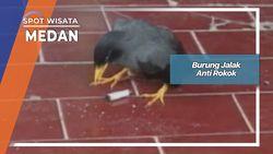 Burung Jalak Anti Rokok, Medan