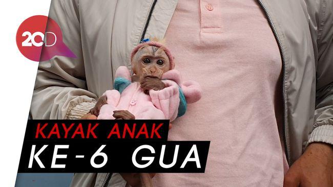 Pelihara Bayi Monyet, Irfan Hakim Anggap Seperti Anak Sendiri