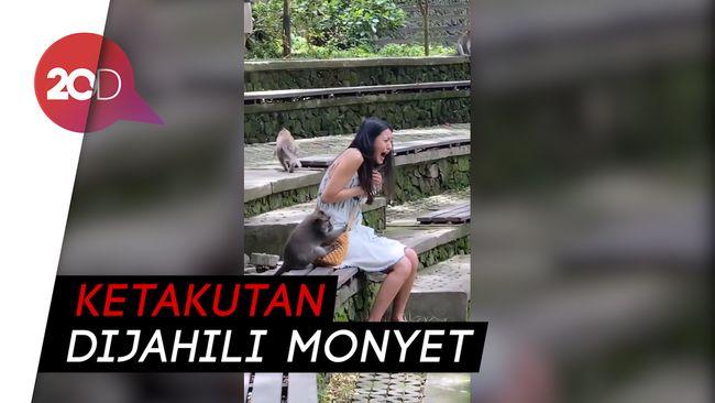 Liburan di Bali, Seolhyun AOA Dijahili Monyet