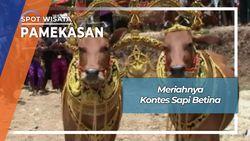 Sonok, Kontes Sapi Betina Desa Dempo Barat Pasean Pamekasan