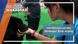 Lomba Anjing Ras Makassar