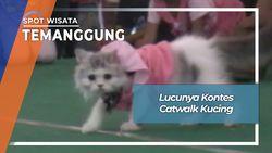 Kontes Catwalk Kucing, Temanggung