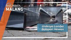 Lomba Balapan Hewan, Malang