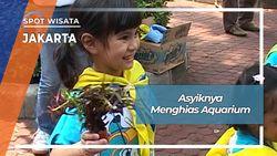 Menghias Aquarium, Jakarta