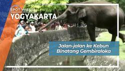 Jalan-jalan ke Kebun Binatang Gembiraloka, Yogyakarta