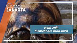Hobi Unik Memelihara Kura-kura, Jakarta