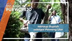 Meraup Rupiah sebagai Pawang Ular, Purworejo