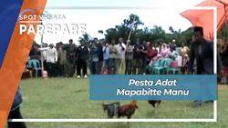 Pesta Adat Mapabitte Manu Paccekke Soppeng Parepare