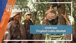 Unik Restoran Badak Di Ujung Kulon Banten