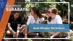 Wow Bule Belajar Berkebun Di Tanah Surabaya Jawa Timur
