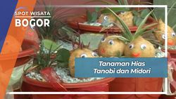 Tanaman Hias Tanobi dan Midori, Bogor