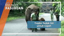 Tradisi Tedak Siti Gajah Prigen Pasuruan