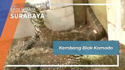 Kembang Biak Komodo Surabaya