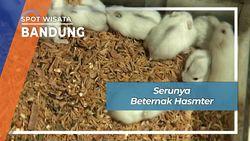 Seru Imut Beternak Hamster Cimahi Bandung