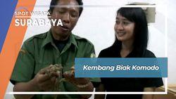 Kembang Biak Komodo, Surabaya
