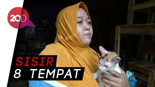 Pecinta Binatang Solo Kembali Sisir Kucing Liar di Pasar