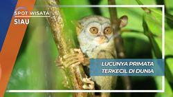 Lucu Imut Tarsius, Primata Terkecil di Dunia dari Kabupaten Siau