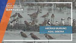 Migrasi Burung Asal Siberia Russia di Taman Nasuinal Sembilang Banyuasin